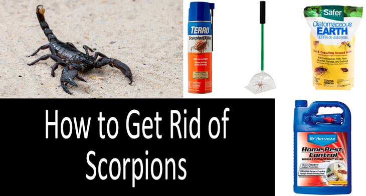 How to Get Rid of Scorpions min: view more