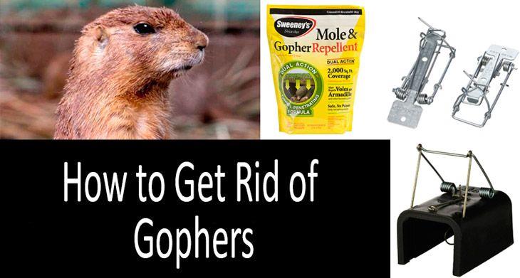 How to get rid of gophers min: view more