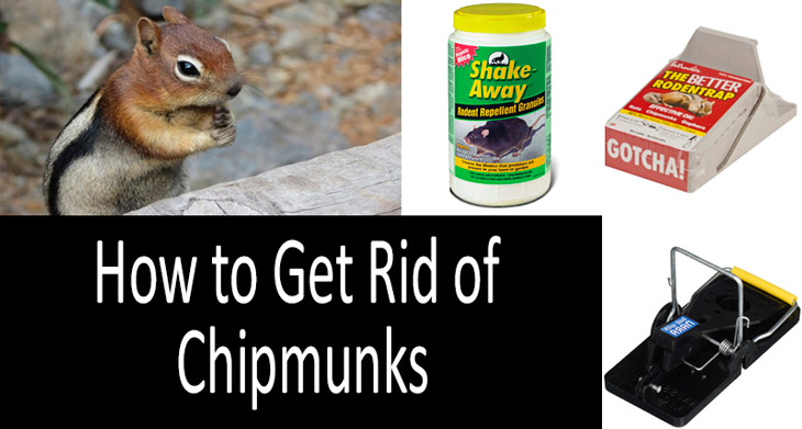 how to get rid of chipmunks min: view more