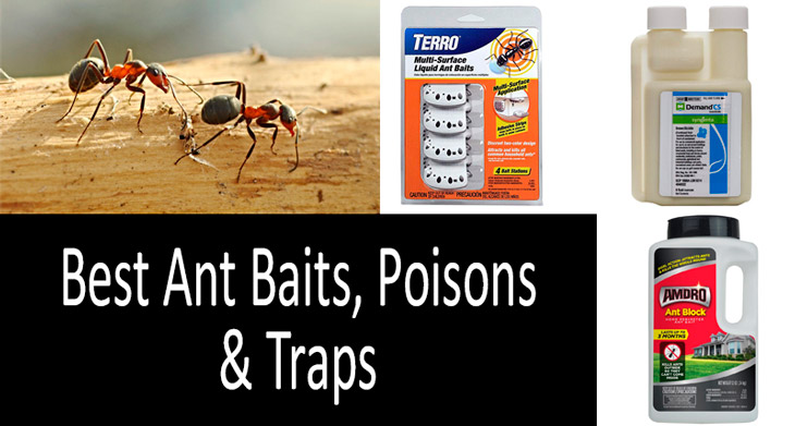 Best Ant Baits, Poisons & Traps min: view more