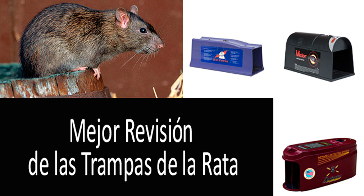 Mejor trampas de la rata min: ver más