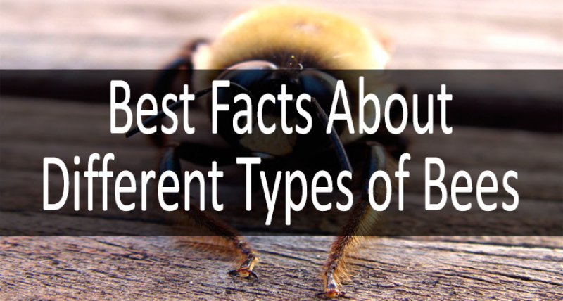 Different Types of Bees min: view more