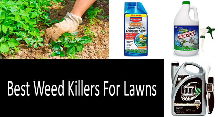 Best Weed Killers min: view more