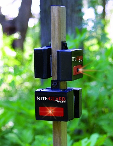 where to place Nite Guard Predator