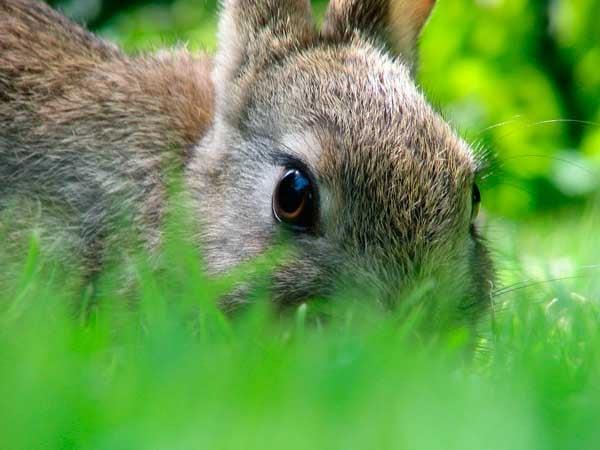 избавляемся от кроликов: фото