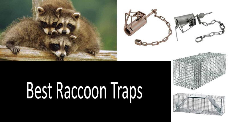 How to choose a raccoon trap: view more