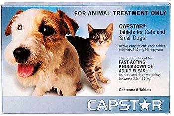 capstap для кошек и собак: фото