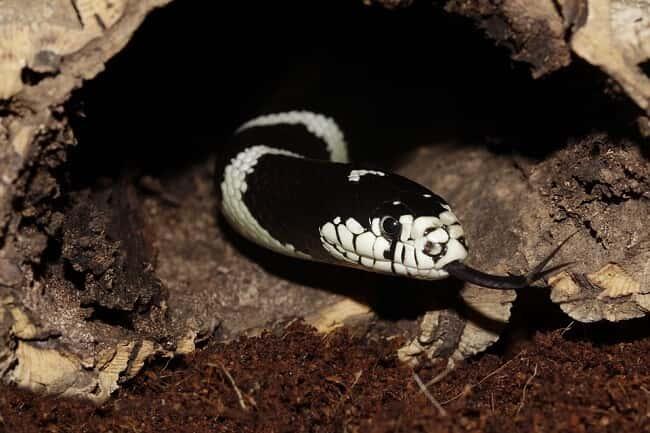 как отпугнуть змей: фото