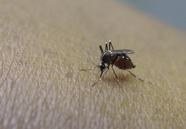 как избавиться от комаров народными средствами: фото
