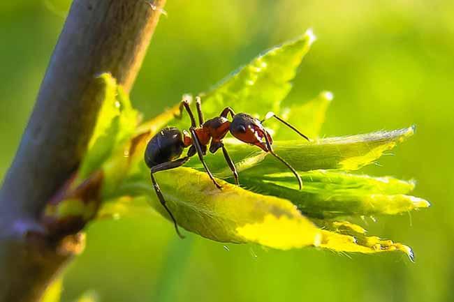 Как избавиться от муравьев: узнать больше