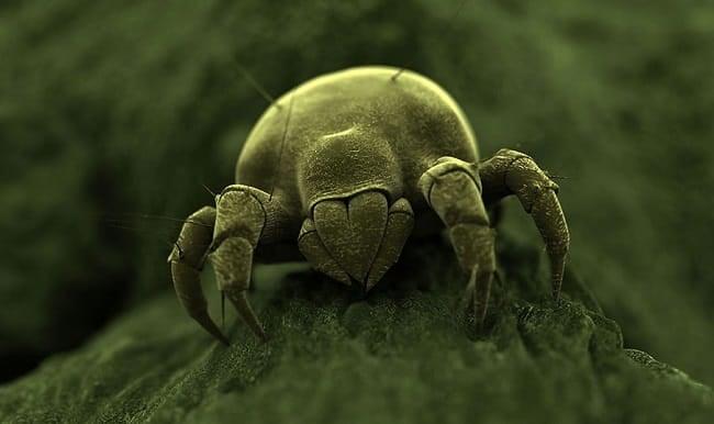 Как избавиться от пылевых клещей в домашних условиях: пылесос, спреи и прочие средства и методы борьбы