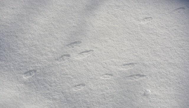 как избавиться от кроликов зимой: фото