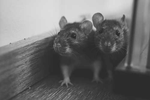 ультразвуковой репеллент от крыс: фото