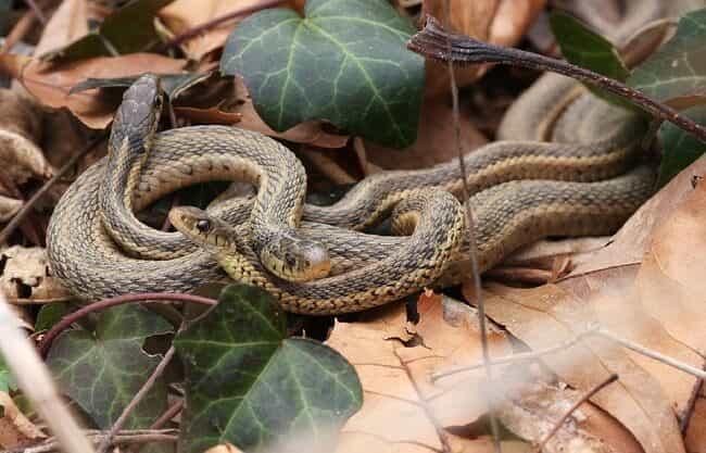 Репелленты от змей: фото