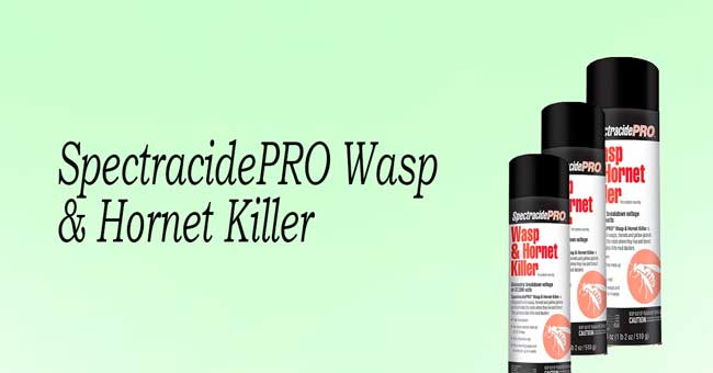 spectracide pro wasp killer