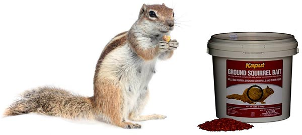use of poison against ground squirrels: photo
