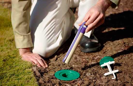 bait for termites: photo
