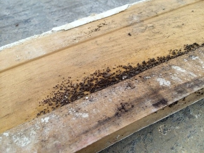 termite damage in the house