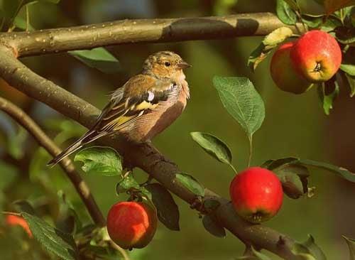 Как избавиться от птиц: фото