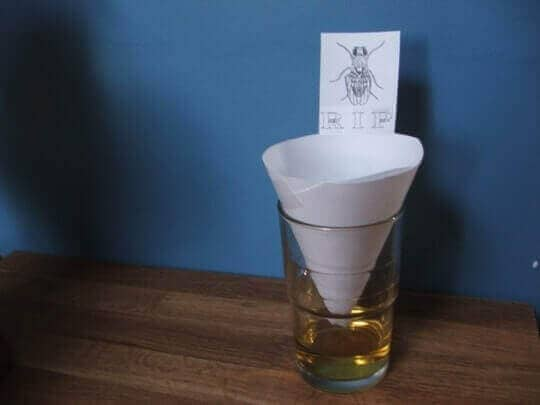conic trap for fruit flies
