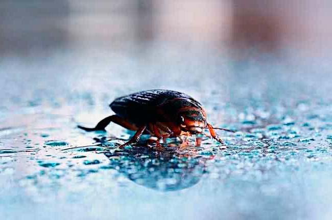 Insectos de agua vs cucarachas: foto