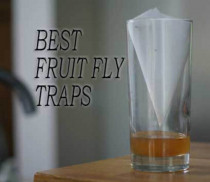 The Best Fruit Fly Traps: Save Your House from Thousands of Flying Insects