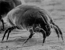 5-Step Guide to Getting Rid of Dust Mites: Best Ways to Remove Parasite from Your Life and Bed