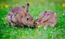 How to Get Rid Of Rabbits and Keep Them Out Of Your Garden