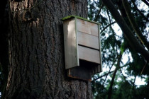What You Should Know About Proper Bat Boxes and Houses: A Guide about Locating the Bat House