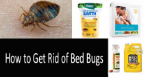 How to Get Rid of Bed Bugs Fast: Scientifically Approved Ways and Products: Bed Bug Traps, Mattress Protectors, Sprays and Dusts