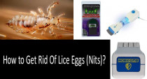 How to Get Rid Of Lice Eggs (Nits)? Which Lice Comb Is Better: Metal or Electric One