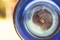 How to get rid of wasps and yellow jackets