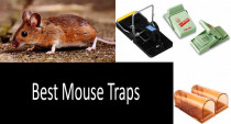7 Best Mouse Traps Worthy of Buying