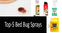 The 5 best bed bug killer sprays Comparison Review