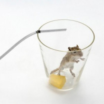 Homemade Rat and Mouse Trap – The Easy Way to Get Rid of Rodents