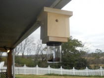 How to Get Rid of Carpenter Bees: Top-3 Best Carpenter Bee Traps