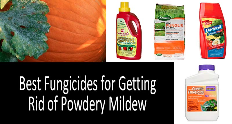 Best Fungicides For Powdery Mildew And Snow Mold Treatment