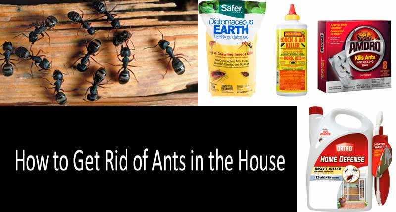 How To Get Rid Of Ants In The House 11