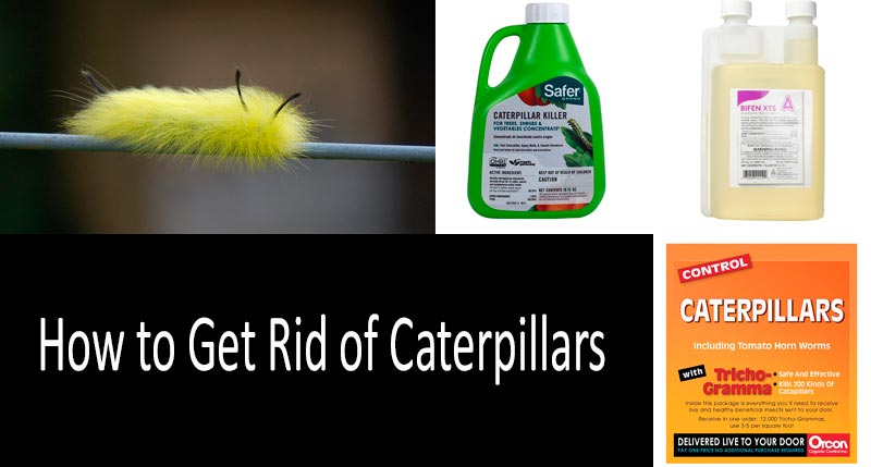 How To Get Rid Of Caterpillars Top 6 Caterpillar Control Products