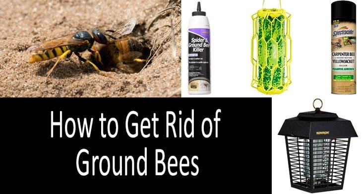 How To Get Rid Of Ground Bees In My Yard
