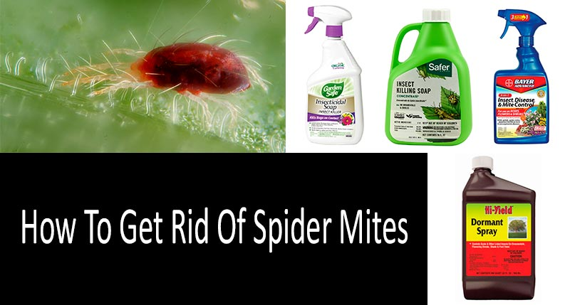 How To Get Rid Of Spider Mites: TOP-8