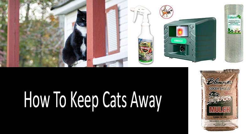 How To Keep Cats Away: TOP-9 products and devices
