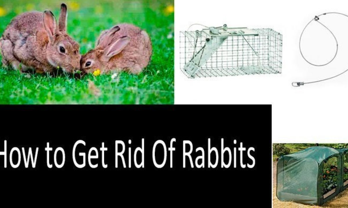 View How Do I Get Rid Of Rabbits In My Backyard Background ...
