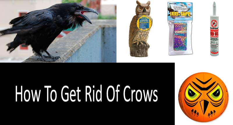 How To Get Rid Of Crows: TOP-9 Repellents