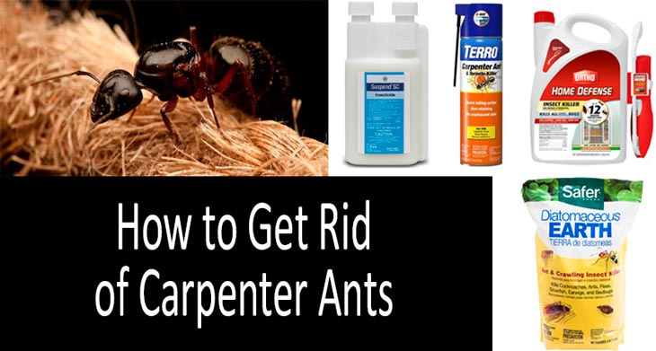 Finding the Relied on methods for Ant Removal