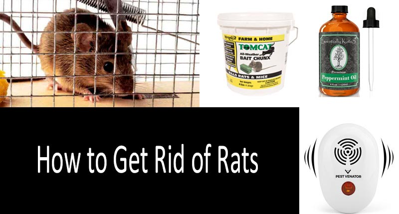 ️ How To Get Rid Of Rats In Your House And Yard Killing