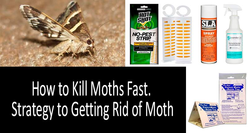 How To Get Rid Of Moths Best Traps