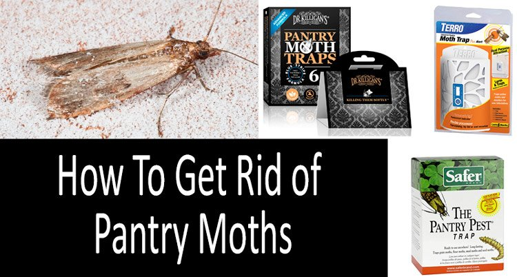 Get Rid Of Pantry Moths In The Kitchen, How Do I Get Rid Of Moths In My Kitchen Pantry