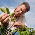 Ian MacRae, Entomologist: photo