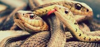 Prodotti Serpenti Control